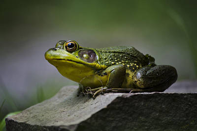 Photograph - Frog Outcrop by Christina Rollo