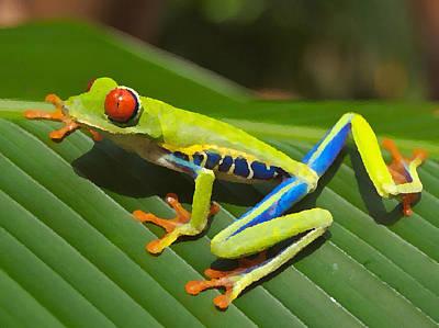 Frog Painting - Frog Paintings by Nicole Gardner