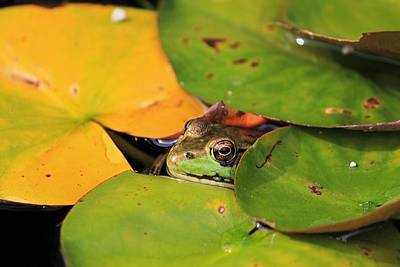 Photograph - Frog Pond 3 by Michael Saunders