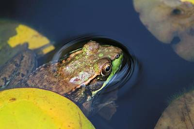 Photograph - Frog Pond by Michael Saunders