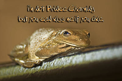 Prince Charming Photograph - Frog Prince by Carolyn Marshall