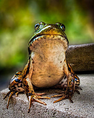 Framed Inspirational Wildlife Photograph - Frog Prince Or So He Thinks by Bob Orsillo