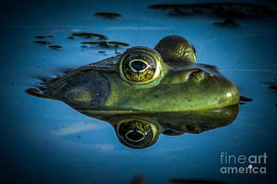 Photograph - Frog Reflection by Ronald Grogan