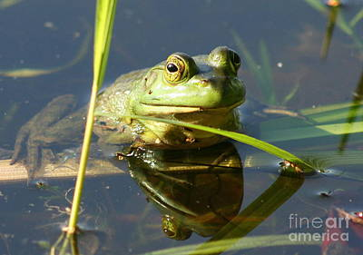 Frog Photograph - Green Frog Reflected  by Neal Eslinger