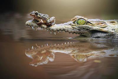 Photograph - Frog Sitting On A Crocodile Snout, Riau by Shikheigoh