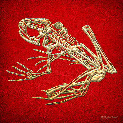 Frog Skeleton In Gold On Red  Art Print by Serge Averbukh