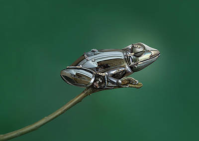 Metal Wall Art - Photograph - Frog by Sulaiman Almawash