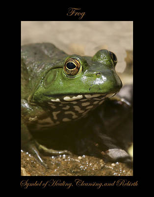 Photograph - Frog Symbol Of by Marty Maynard