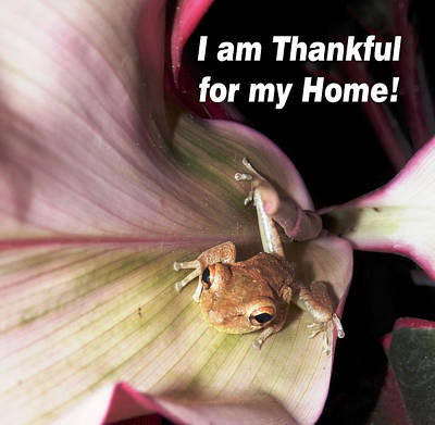 Photograph - Frog Thankful For His Home by Belinda Lee