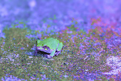 Photograph - Frogger by Jessica Snyder