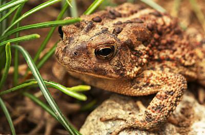 Photograph - Froggin by Karol Livote