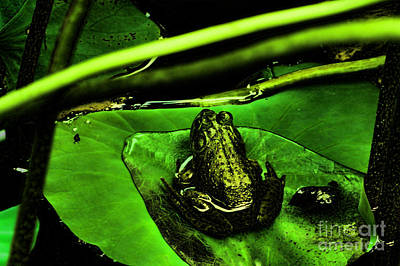 Charlotte Framed Art Photograph - Froggy by B Wayne Mullins