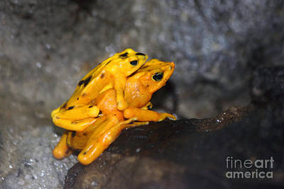 Frogs Photograph - Froggy Back by James Brunker