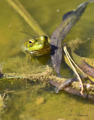 Photograph - Froggy On Alert by Allen Sheffield