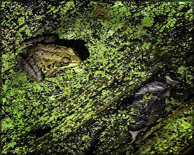 Toad Photograph - Frogs In Bear Creek by LeeAnn McLaneGoetz McLaneGoetzStudioLLCcom
