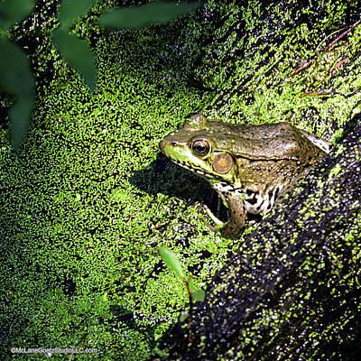 Swamp Photograph - Frogs On A Log by LeeAnn McLaneGoetz McLaneGoetzStudioLLCcom
