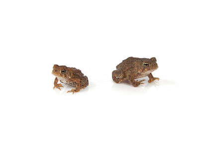 Photograph - Frogs by Scott Sanders