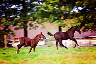 Equine Photograph - Frolicking Friends by Donna Doherty