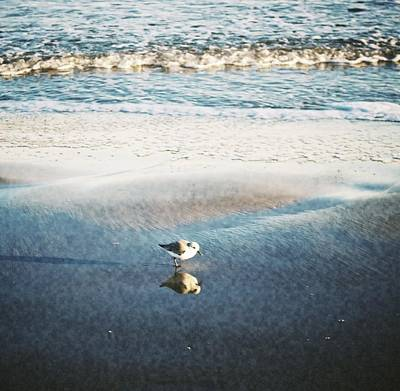 Photograph - Beach Bird's Reflection by Kristina Deane