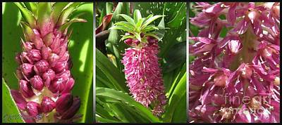 Photograph - From Bud To Bloom - Eucomis Named Leia by J McCombie