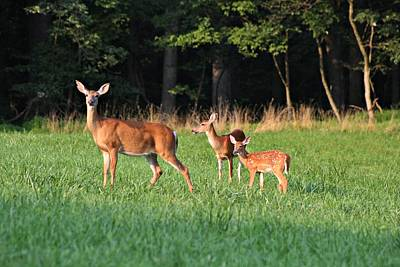 Deer Photograph - From Old To Young by Timothy Coover