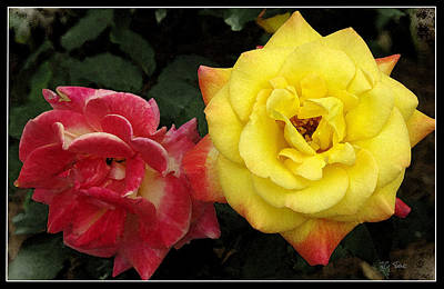 Photograph -  Red To Yellow by James C Thomas