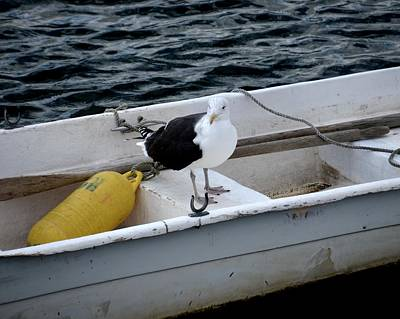 Rowboat Digital Art - From Rockport Ma A Seagull Chilling Out In A Rowboat by Toby McGuire