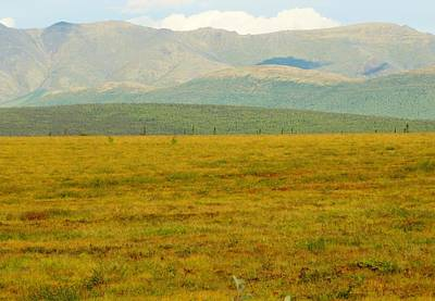 Photograph - From The Denali Highway by Lisa Dunn