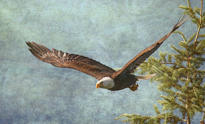 Eagle In Flight Photograph - From The Tree Tops by Angie Vogel