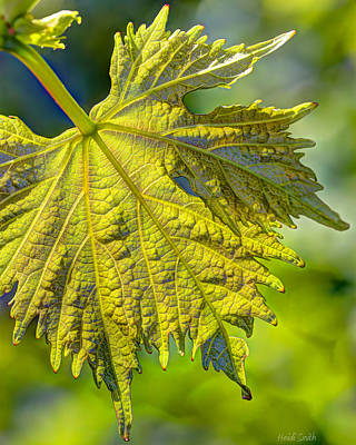 Grape Leaves Photograph - From The Vine by Heidi Smith