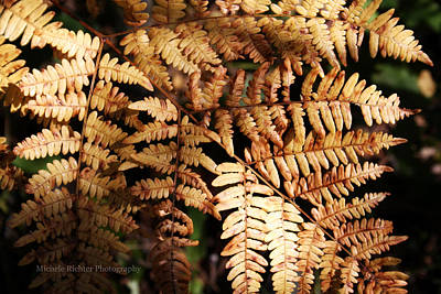 Frond Close Up Art Print by Michele Richter