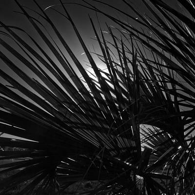 Photograph - Fronds by George Taylor