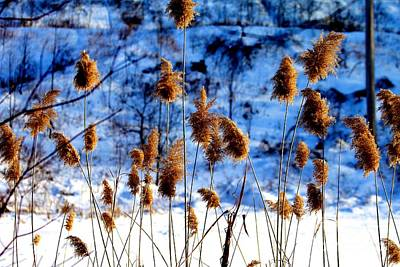 Print featuring the photograph Fronds In Winter by Eleanor Abramson