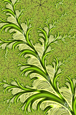 Abstract Shapes Digital Art - Fronds by John Edwards