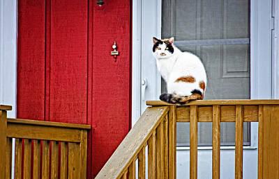 Front Porch Cat Art Print