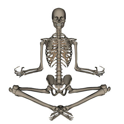Front View Of Human Skeleton Meditating Art Print by Elena Duvernay