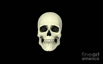 Front View Of Human Skull Print by Stocktrek Images