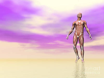 Muscular Digital Art - Front View Of Male Musculature, Pink by Elena Duvernay