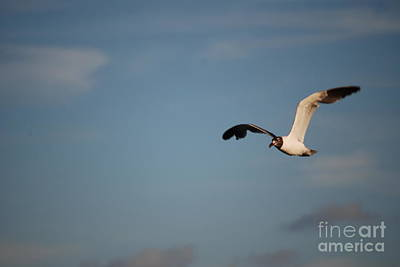 Photograph - Front View Seagull In Flight by Mark McReynolds
