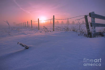 Barbed Wire Fences Photograph - Frost And Fenceline by Dan Jurak