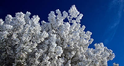 Photograph - Frost Bitten by Phil Koch