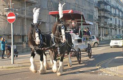 Photograph - Frost Fair Horses Hastings by David Fowler