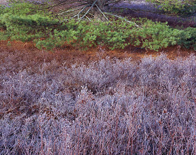 Photograph - Frost Field And Pine Bough by Tom Daniel
