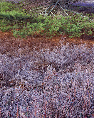 Photograph - Frost Field And Pine Bough-v by Tom Daniel