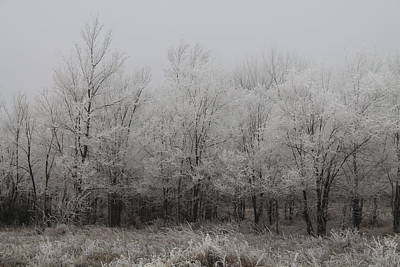 Photograph - Frost Forest by Alicia Knust