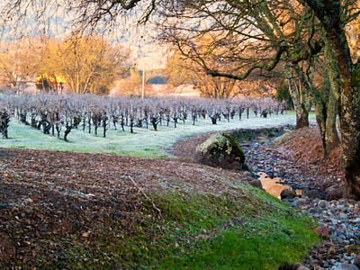 Grapevine Photograph - Frost In The Valley by Bill Gallagher