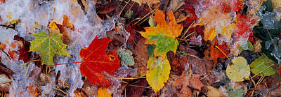 Fallen Leaves Photograph - Frost On Leaves, Vermont, Usa by Panoramic Images