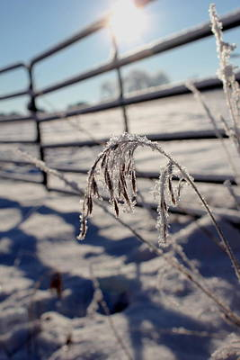 Photograph - Frost On The Farm by Trent Mallett