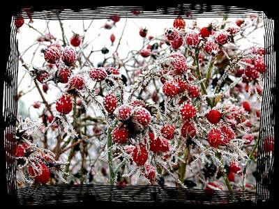 Photograph - Frost On The Rosehips by Will Borden