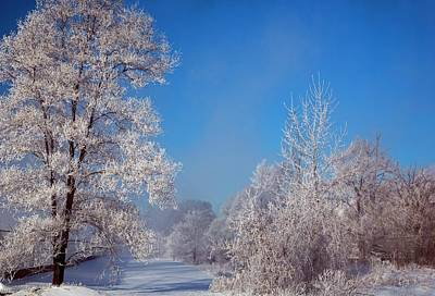 Frost On Trees In Winter Art Print
